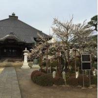 青梅金剛寺